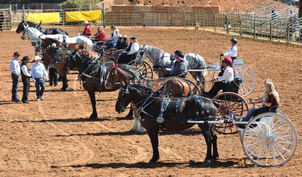 Draft horses of many different breeds and cross breeds are judged against each other during the juniors competition of the 2017 Draft Horse Classic at the Nevada County Fairgrounds.