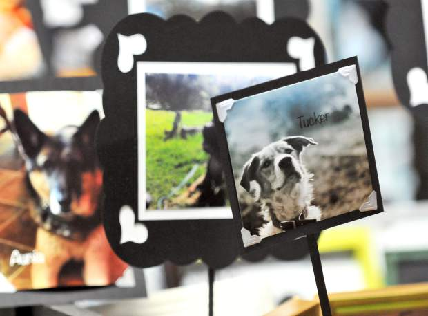 An altar honoring lost pets, including homeless pets and sheltered pets, are on display at the Altar Show at the Nevada County Fairgrounds through November 5th.