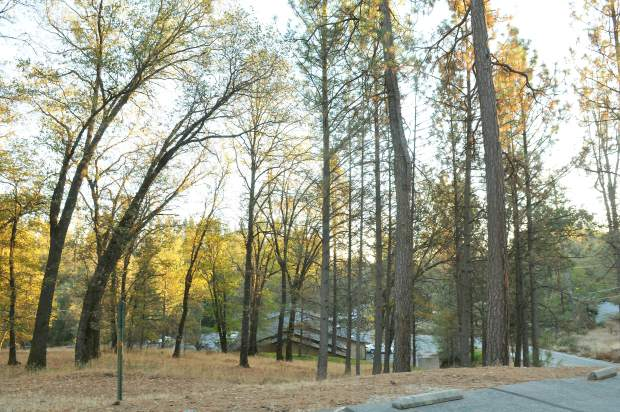 A stand of oak and pine trees sit in the location for a proposed Alta Sierra Dollar General store. The Nevada County Planning Commission struck down the location after a four hour deliberation Thursday afternoon.