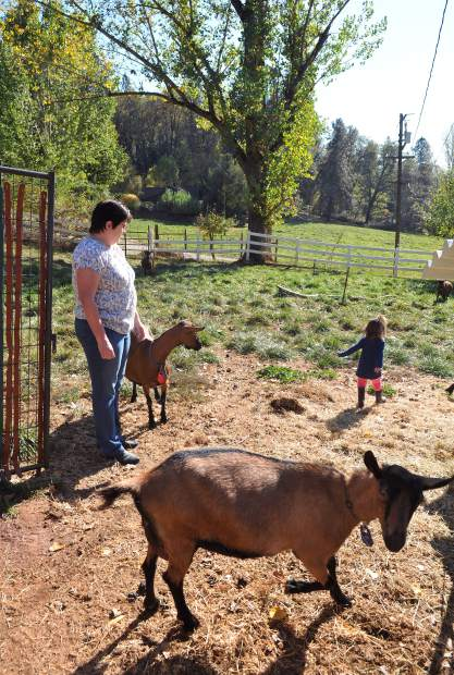 Goats roam freely on the Friedberg's Highway 174 ranch. The couple fears that possible removal of the goat's pasture to make way for road modificatoins may force the animals into pens. Shannon and Steve Friedberg have been making goat milk soap and lotion products for the past decade.