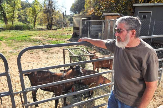 Steve Nightingale and wife Shannon Friedberg have been happily making goat milk soap and lotion from goats raised at their Highway 174 property. Their rural lifestyle, they fear, is being threatened by plans to widen Highway 174.