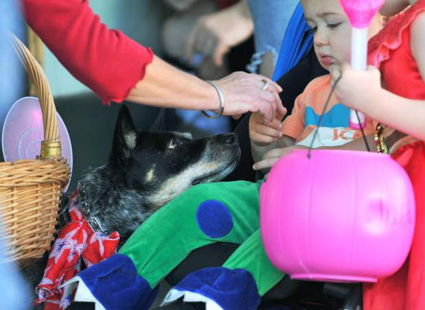 Abigail Rose the dog, looks to capitalize on any dropped treats during Tuesdays safe trick or treat event in downtown Grass Valley.