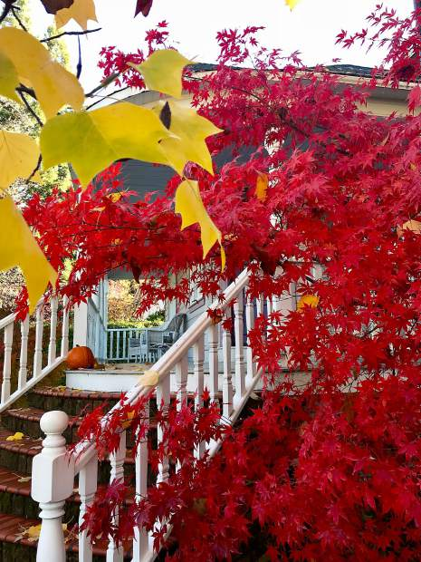 Fall trees and leaves captured Tuesday morning in Nevada City.