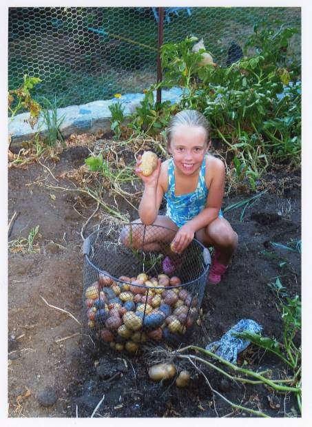 Audrey Reneau helps her grandfather harvest local potatoes.
