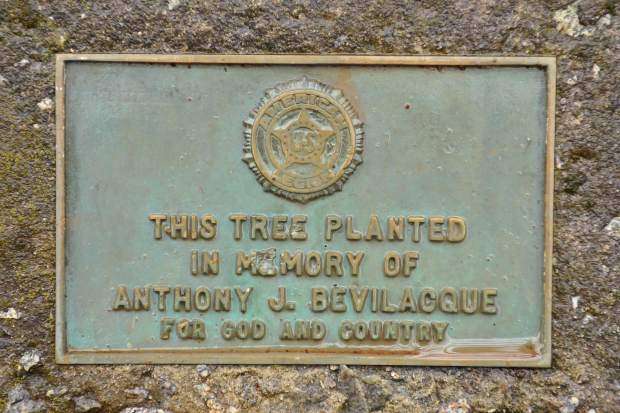 A memorial plaque dedicated to Anthony J. Bevilacque sits at the base of a tree originally slated for removal to make room for pickleball courts in Grass Valley's Memorial Park.