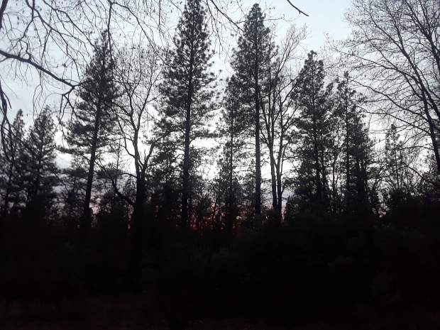 Scenic shot of trees at Condon Park in Grass Valley.