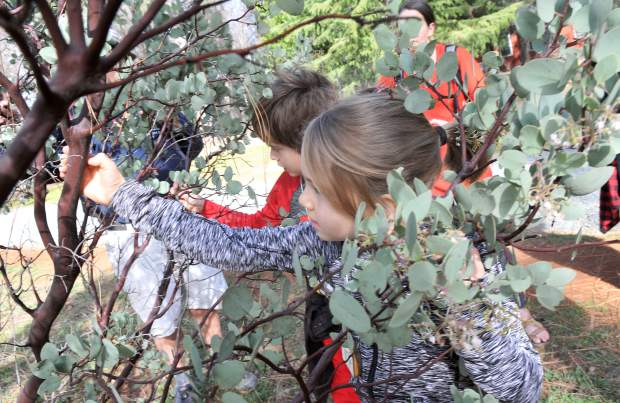 Youngsters Cecilia Neiser and Harrison Adams discover the smoothness of the manzanita's bark during Saturday's junior conservationist hike along the Litton Trail in Grass Valley.