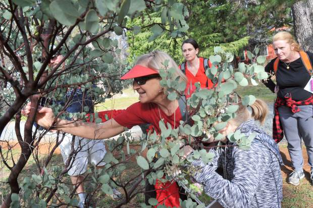 Linda Conklin shows the youngsters some of the many uses of the manzanita plant during Saturday's junior conservationist hike along the Litton Trial in Grass Valley.