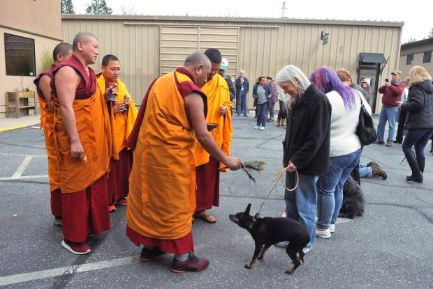 A dog shakes off droplets of water from Sundays animal blessing at Animal Save in Grass Valley.