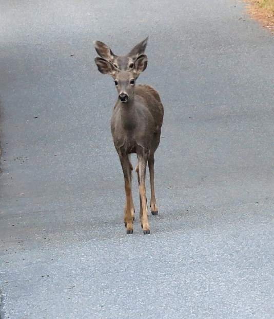 Shot where it looks like one deer with two heads, but it is really two deer.