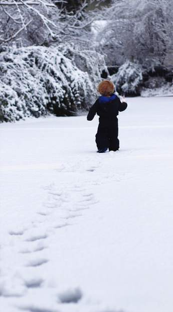 Ollie enjoying the snow for the first time in downtown Grass Valley.