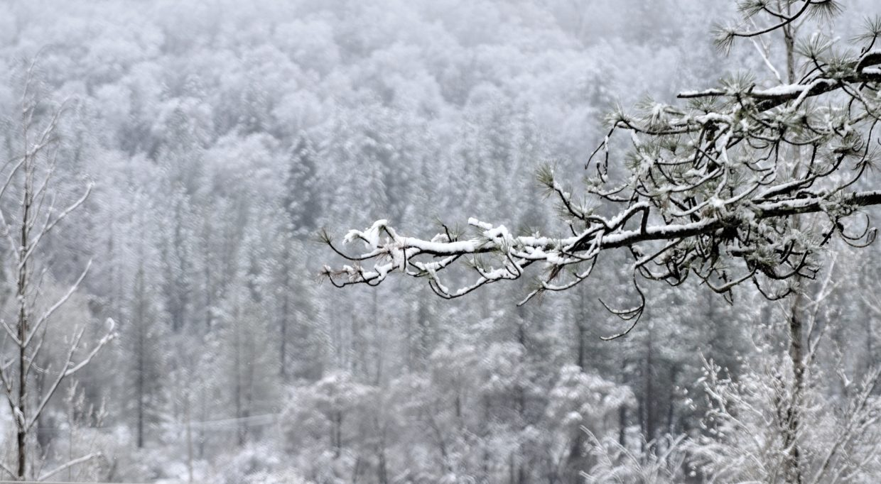 Much of Nevada County lived up to it's name today when folks awoke to a wintry wonderland.