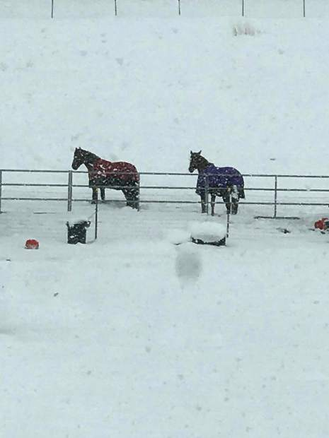 Snow falling on horses off of Red Rock in Reno.