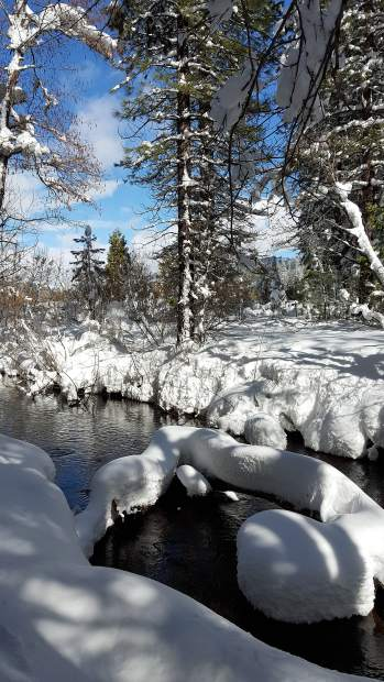 Bear Valley Creek in snow.