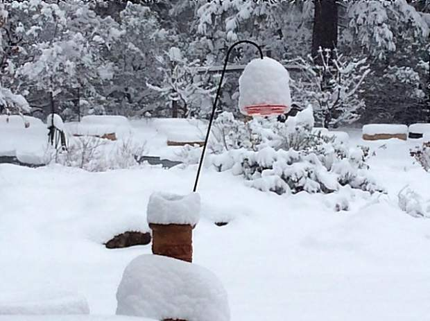 Hummer feeder at Turkey Flats Ranch.