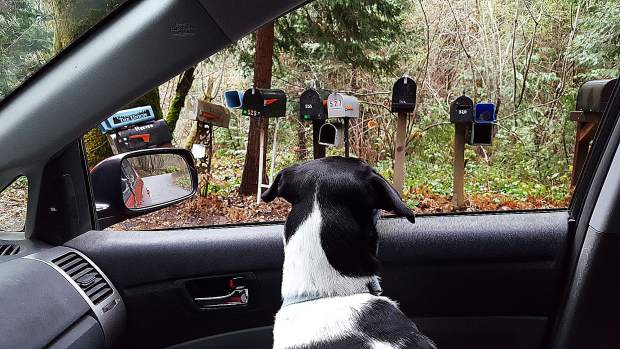 A local dog waiting for the mail lady.