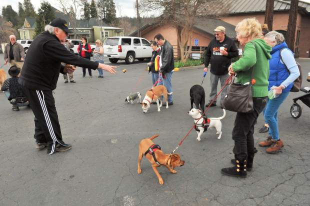 Grass Valley Mayor Howard Levine makes sure that each dog gets a piece of pasty during the annual pasty toss.