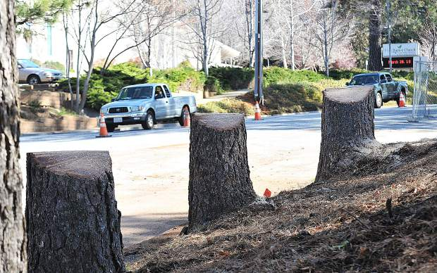 Approximately 30 trees were felled on the Nevada Union High School Campus as part of Measure B construction.