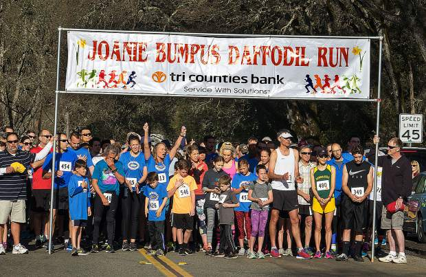 Hundreds of runners and walkers took part in the 18th annual Joanie Bumpus Daffodil 5K/10K in Penn Valley Sunday. Proceeds from the event support several causes including, Penn Valley area schools, a scholarship for a Nevada Union High School senior, the planting daffodil bulbs in the community and Western Gateway Park.