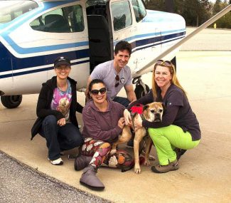 Collaboration lands local treatment, home for pup