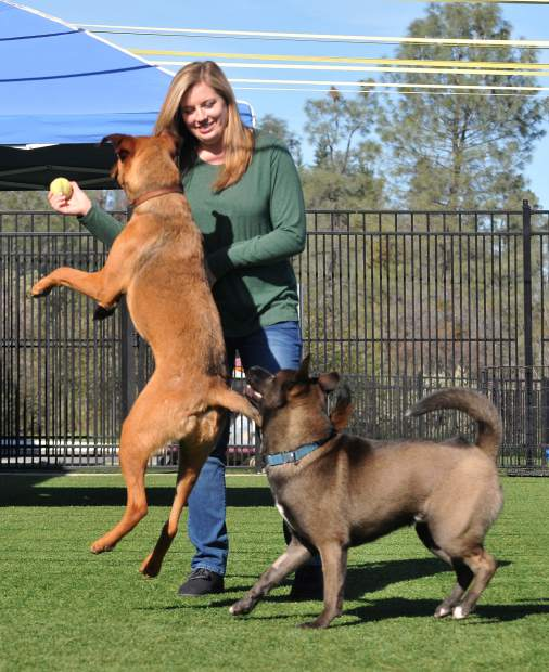 Sammie's Friends' Alex Maloney plays with Airborne and Rio in the shelter's yard in February.