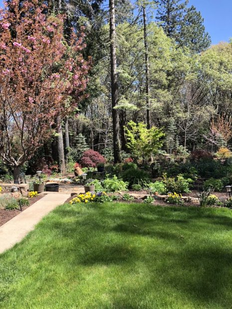 Be amazed and inspired at the Soroptimist Garden Tour | TheUnion.com