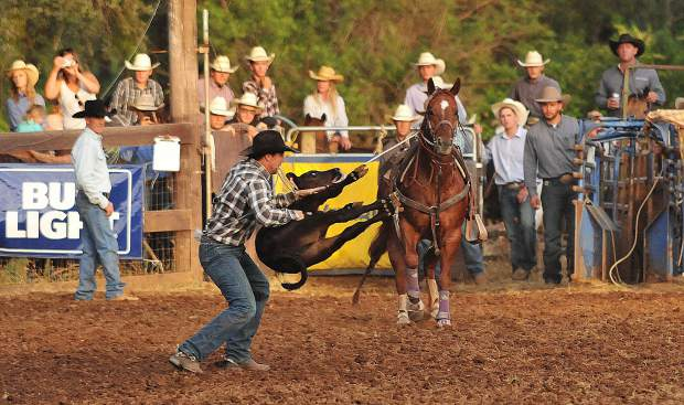 A tie down calf roper wrestles a calf to the ground during Friday evening's opening events at the Penn Valley Rodeo.