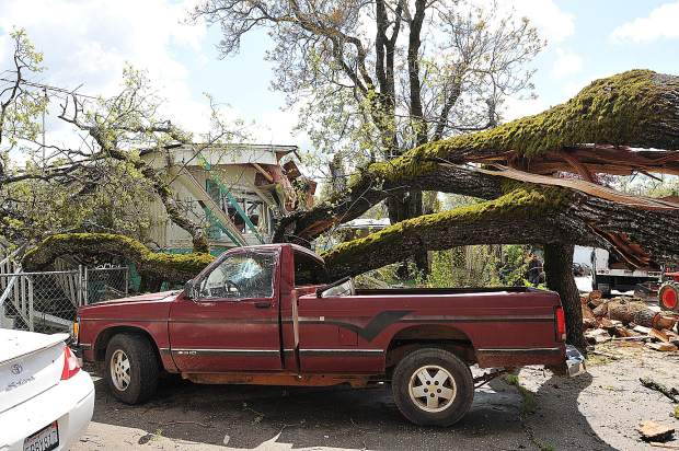 The Magliocca's only vehicle was also destroyed when the old oak tree fell in April of 2017.