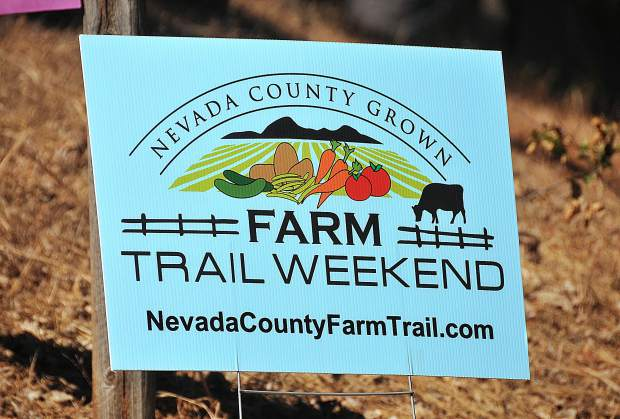 Organizers of the inaugural Nevada County Grown Farm Trail Weekend say that the two day event was a success, though next year may have less farms featured along the trail.
