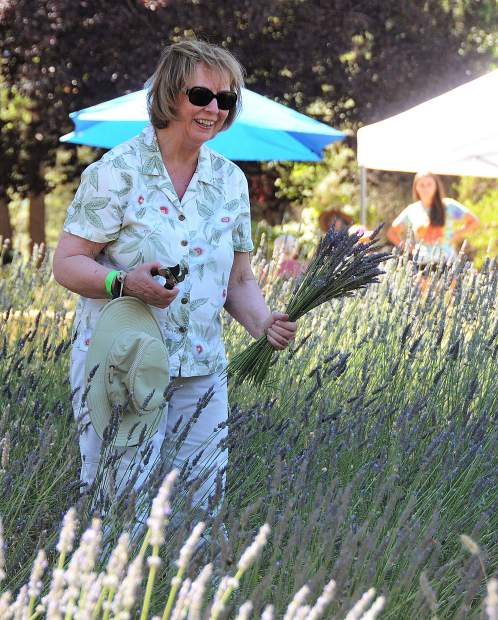 Nevada City's Joanne Witte smiles after getting the opportunity to cut her own fresh lavender from the fields at Tres Jolie Lavender Farm near Lake of the Pines.