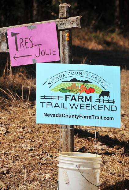 Signs show the way to the 12 Nevada County farms on the Farm Trail Weekend.