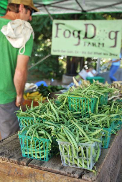 A farmer's market attendee browses over Fog Dog Farms' selection of French Filet Beans.