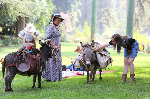 Lynette Wood, an Empire Mine docent from Forbestown, offers her miniature donkeys Huckleberry and Mojo, for attendees of the 123rd annual Miners Picnic to pet and take photos with Saturday afternoon at the state historic park. While mini donkeys were't in Nevada County during the early mining years, their full size counterparts were.