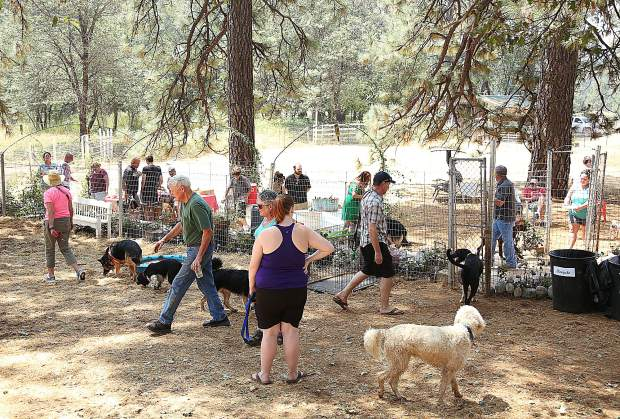 Folks mingle among the new grounds of the Paws'itive Pals dog training center following Wednesday afternoon's ribbon cutting ceremony.