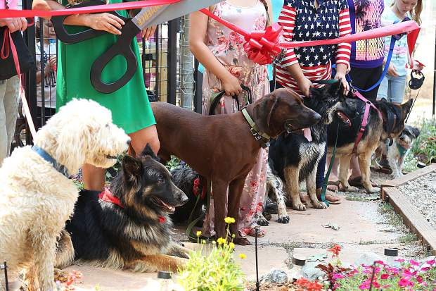 Paws'itive Pals canines line up in well behaved fashion for the ribbon cutting ceremony Wednesday.