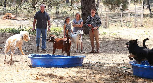 Paws'itive Pals canines and their handlers enjoy the open space and doggie pools to cool down.