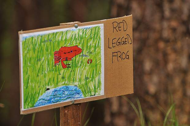 Artwork by Grass Valley Charter School students depicts animals that do, or could, live in the Wolf Creek watershed and are placed along the one-mile stretch of recently opened trail.