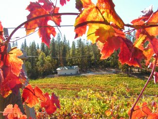 Sierra Vintners Autumn Wine Trail