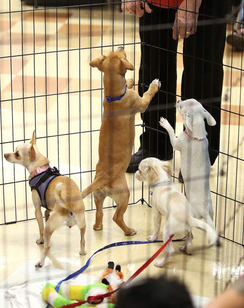 Small pups are eager to say hi to potential new owners during Saturday's adoptathon at PetCo held by Rescue for Pets Sake.