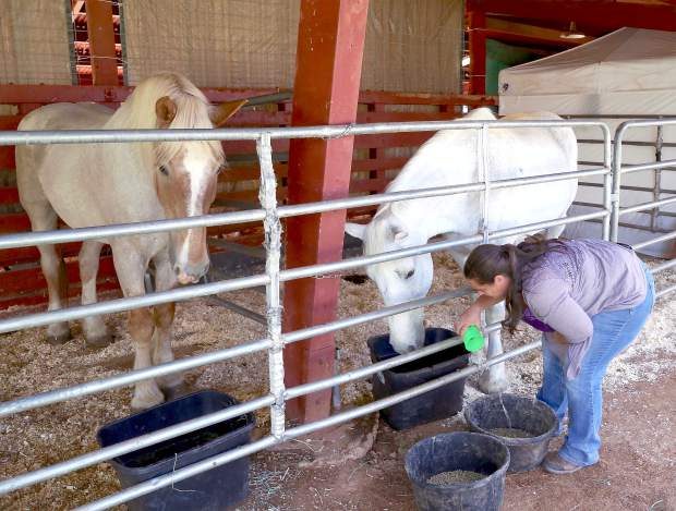 Nicki Van Tuyl feeds Donna and Moose during the Draft Horse Classic at the Nevada County Fairgrounds Thursday.