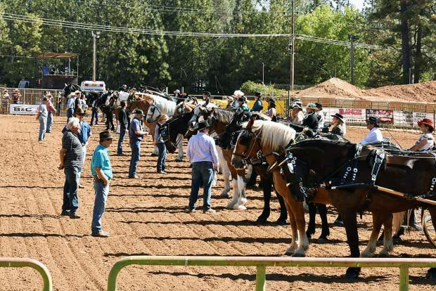 Draft Horse Classic judging at the Nevada County Fairgrounds.