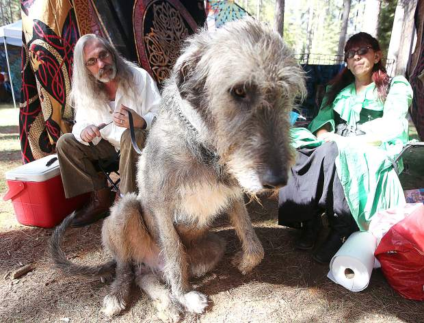 The Irish Wolfhound camps are popular among Celtic Fair goers making stops alongside the likes of Killian and owners Harry and Lisa Burr out of Vallejo.