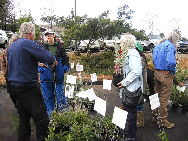 California Native Plant Society Redbud chapter will holds its annual fall native plant sale at the North Star house today.