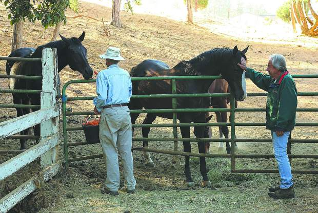 Neighbor Jerry Czember (left), who has become to be known by the hoses as the carrot man, helps Diamond F Ranch owner Dave Ferguson feed the horses in the mornings.