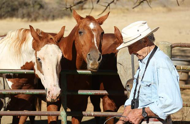A group of anxious horses await a carrot snack from neighbor Jerry Czember.