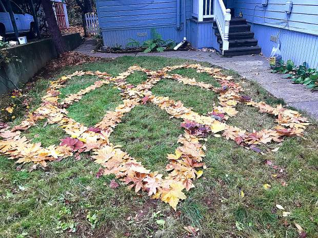 Celtic knot from a bigl leaf maple tree In a local backyard by.