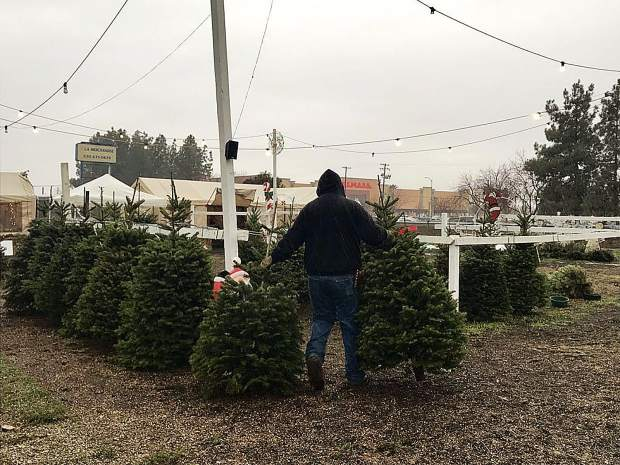 Tradition Of Real Christmas Tree May Be Harder To Come By