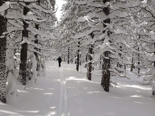 Lone skier crosses upper plantation at Steep Hollow Cross Country ski area off Highway 20 on Feb. 6.