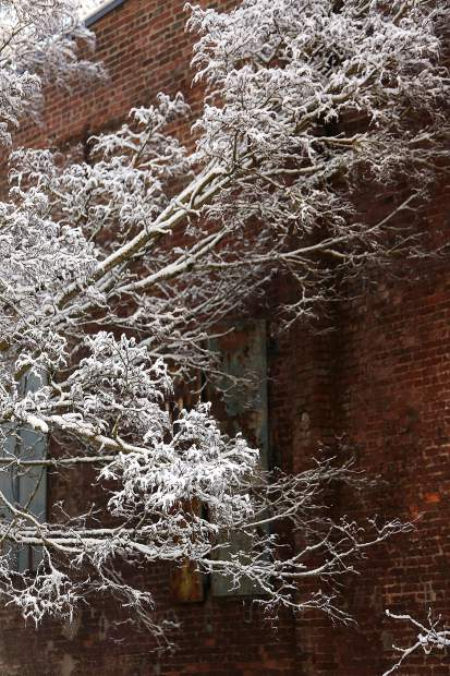 The snow laden boughs of a tree stand out against the historic Nevada City Assay Office, now the Nevada City Chamber of Commerce.