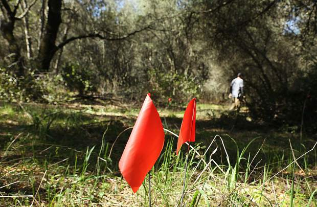 Red flags mark the areas to be cleared for the path of the bike trail at Western Gateway Park.